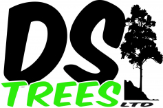 D S Trees Ltd logo