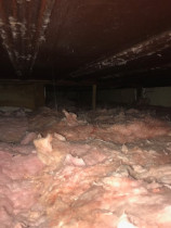 Can you spot the rat? - The problem is that in the cool Waitakere winter, the rats tend to burrow into the roof insulation. You can't see the rats in this roof void but they are there!