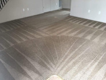 Flooded Carpet cleaning auckland - Auckland carpet steam & dry carpet drying and flood service
