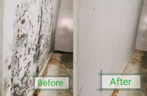 Mould Clean - Cleanse Right Mould Clean in Glenfield