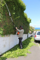 Hedge Trimming - High quality hedge trimming and waste removal