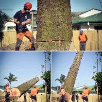Felling - Hardfell Tree Felling - Auckland