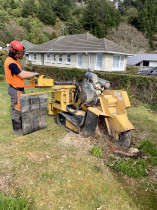 Tree Stump Removal by Leaves And Trees Ltd - Stump removal in Wellington