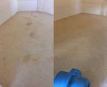 Stain Removal by Steamsy Limited - Stain Removal to get your carpets back to brand new