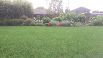 Instant turf lawns, garden layout and maintenance