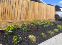 Dressed timber fence over low external lag retaining with black mulch garden