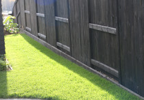 Black good neighbour fence with instant lawn turf