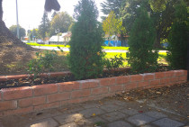 Brick raised garden with cyprus trees and underplanting.