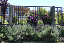 Aluminium fence with machine rounded poles with Lavender and Hydrangers