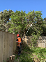 Tree Services in Seatoun, Wellington- Leaves And Trees Ltd Wellington - Tree Pruning