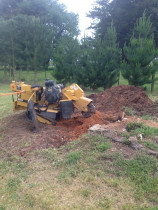 Stump Grinding out a large Poplar tree stump in South Wairarapa.  - Leaves And Trees Ltd
