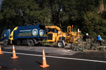 A1 Sure Services North Shore Arborist