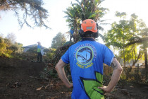 A1 Sure Services Qualified Arborist