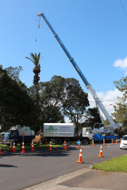 Wheturangi Phoenix palm crane dismantle....by ArborTechniX - This is a recent crane demoliton of a phoenix plam growing through the centre of a scheduled pohutukawa.  Here I've prepared the bulb for the first lift, taking out the head section and then demolishing the remaining trunk section in X 3 lifts...