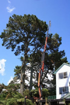Crane extension...ArborTechniX - 23m extension on the crane arm on a large scale pine removal operation...