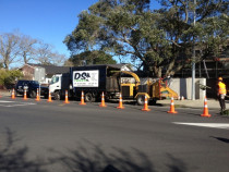 #DS Trees Large Setting up#Norfolk Pine Removal - Large #Norfolk Pine removal In #remuera