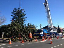 Large #Norfolk Pine Removal with NZ Cranes - #Norfolk Pine Removal using a Crane To lift each section with #NZ Cranes #Remuera