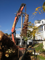 #hiab #palm #removal - removal of palms using hiab in parnell