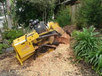 Tracked #stump #grinder - grinding of 1.5m stump with tracked stump grinder.