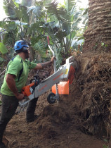 Root pruning a palm to allow the client to reinstate their block wall completed by Daily Grind Stump Grinding