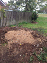 Norfolk pine gone - ready for replanting, job done by Daily Grind Stump Grinding