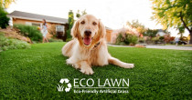 call Eco Lawn Limited for your Turf for Pets, Lawn for Pets, Grass for Pets, Artificial Grass, Artificial Lawn, Artificial Turf - All of our products are non-toxic, children and pet friendly.