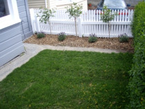 After Lawn by Emerald Lawns Ltd