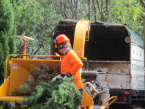 Clearing up resultant tree waste