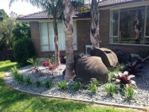 Subtropical Swanson - Existing garden revamped with some new planting and pebble