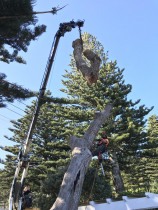 Tree removal with a Crane  - Leaves And Trees Ltd