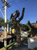 Tree work with a Crane in Eastbourne.  - Leaves And Trees Ltd