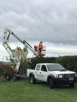 Tree trimming with a Cherry picker in Lower Hutt.  - Leaves And Trees Ltd