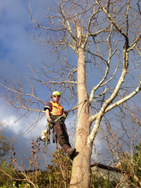 Tree removal in Silverstream, Upper Hutt  - Leaves And Trees Ltd