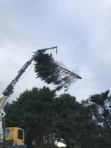 Tree trimming with a Hiab in Plimmerton.  - Leaves And Trees Ltd