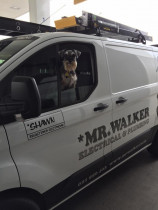 Frankie from Mr Walker Electrical & Plumbing riding shotgun!