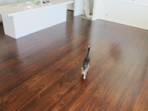 Stained Pine byNorth Shore Floor Sanding 2018 Ltd