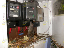 Rats Meter Box - Rats nesting in the power meter box.