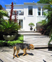 Seed Landscapes - Floating decking - Floating stepped decking leads from the house to the pool