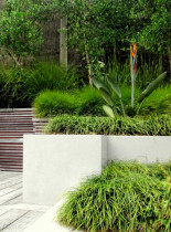 Seed Landscapes - Raised beds - Seed Landscapes designed rendered masonry raised gardens and timber slat clad retaining walls to resolve a slope and to create and define a beautiful courtyard space.