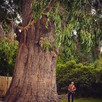 Sherwood Forestry - Deadwooding a 45m protected Gum tree.