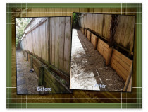 Retaining Wall - Greenhithe - Was black with mould, now looking it's best again - Revived!