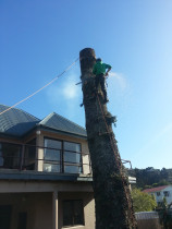 Treespecs - Blocking down - This was a big Norfolk pine . Tight location  between houses all rigged down safe.