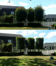 Treespecs - Cleaning up some lily pilys - Well over grown property getting a tidy up for the new owners in remuera
