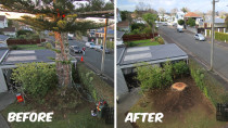Norfolk Pine Removal - In Point chev there was a large orfolk pine that was growing through the powerlines and over houses. We removed the tree without causing any damage to private property. Awesome!!