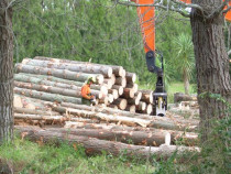 Commercial Woodlot Logging - We have the experience and contacts to make the most of your woodlot assets.