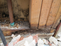 High moisture reading 34% garage door surround  inspected by Weathertight Home Inspections - Moisture damage to bottom plate and studs, Black mould growth